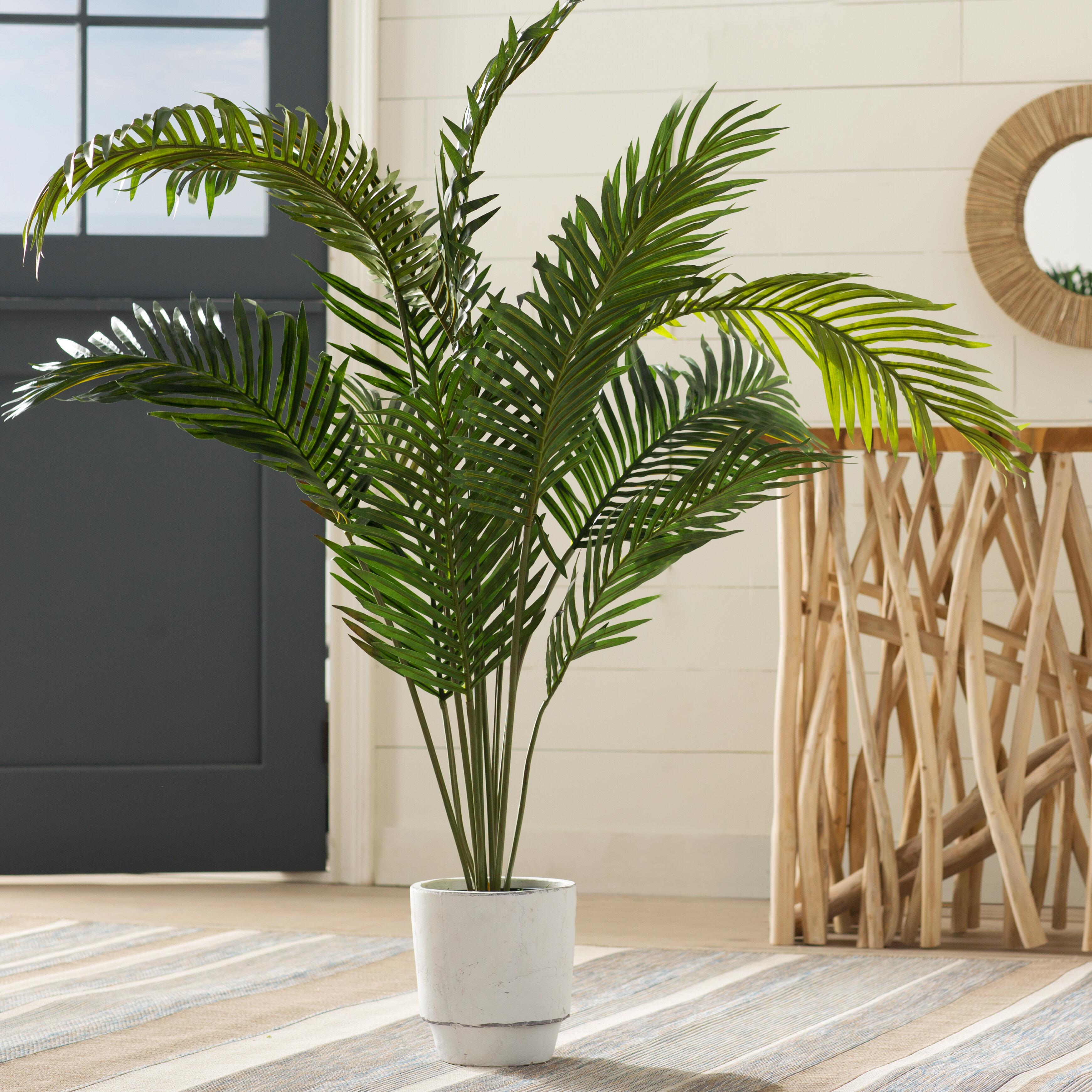 Beachcrest Home Black Hammock Floor Palm Tree in Pot & Reviews | Wayfair