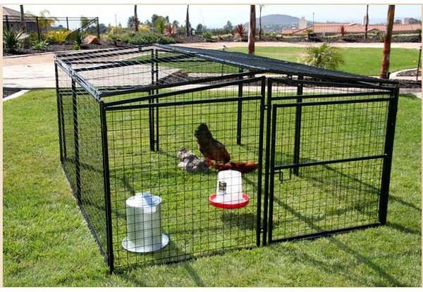 Rugged Ranch Universal Welded Wire Dog Pen/Chicken Coop U0026 Reviews | Wayfair