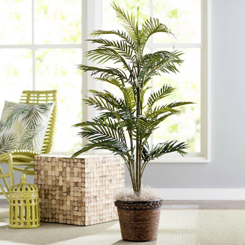 Beachcrest Home Bermudiana Palm Tree In Basket & Reviews