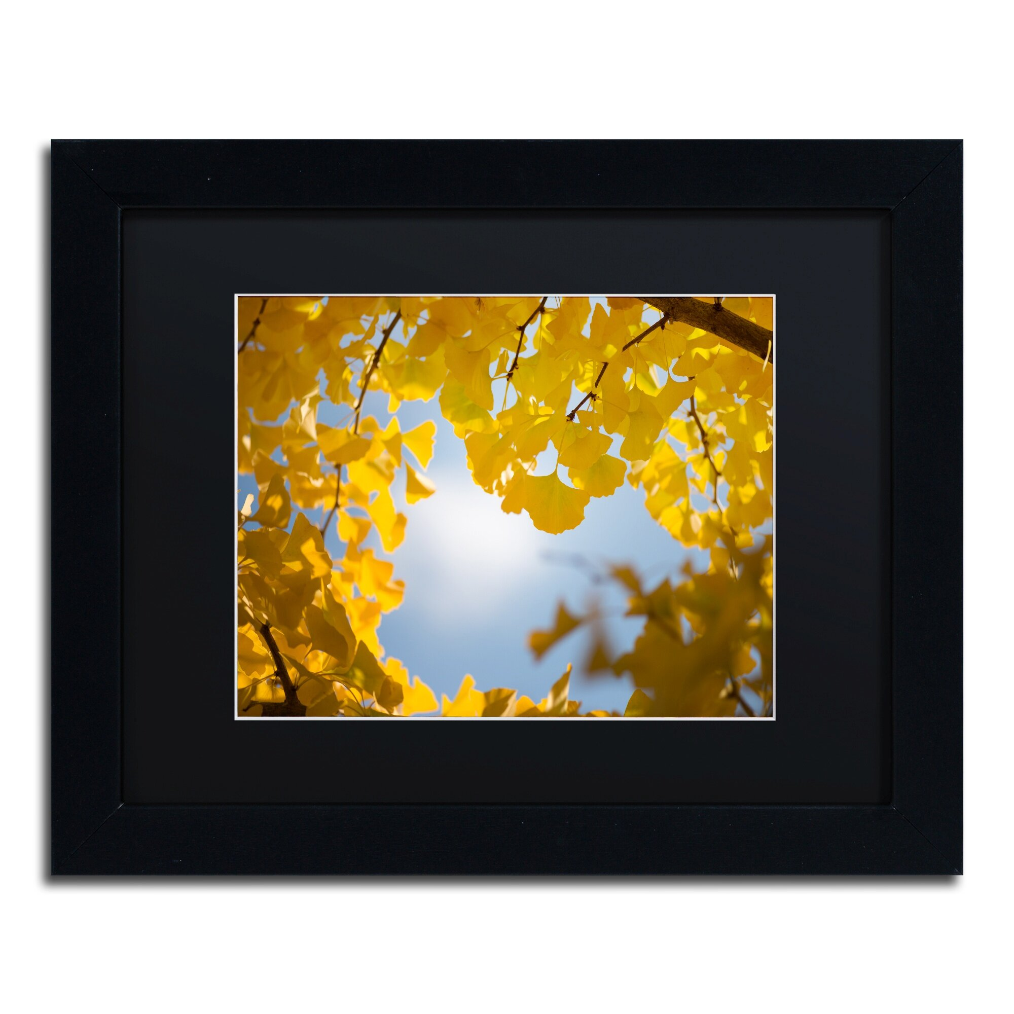 Trademark Art \'Ginkgo Leaves in Autumn\' by Philippe Sainte-Laudy ...