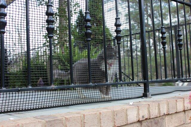Cardinal Gates Heavy Duty Outdoor Deck Netting Amp Reviews