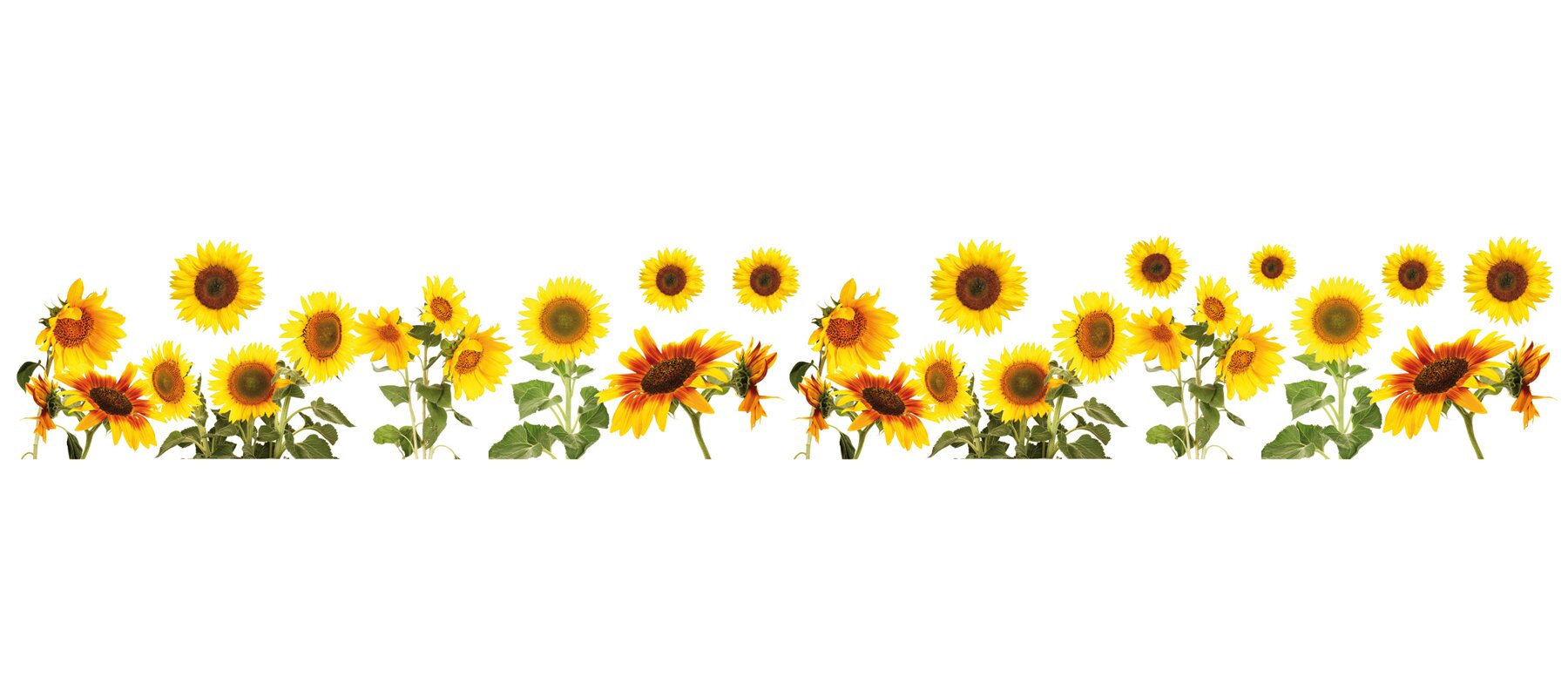 Wallpops Sunflowers Border Wall Decal Amp Reviews Wayfair