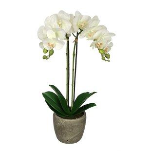 White flower arrangements youll love wayfair white flower arrangements mightylinksfo