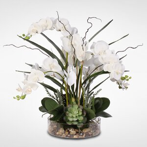 Phalaenopsis Orchid with Succulents Floral Arrangement in Pot