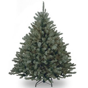 blue spruce tree with clear lights