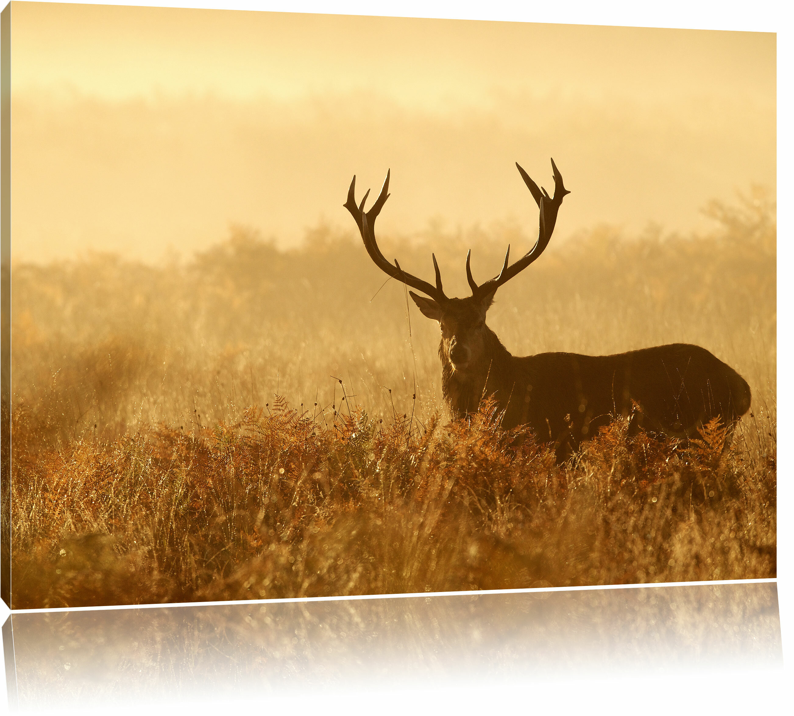 AlpenHome Red Deer Stag at Twilight Wall Art on Canvas | Wayfair.co.uk