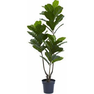 classy pictures of cactus house plants. Fiddle Leaf Tree in Pot Modern Faux Plants  Florals AllModern
