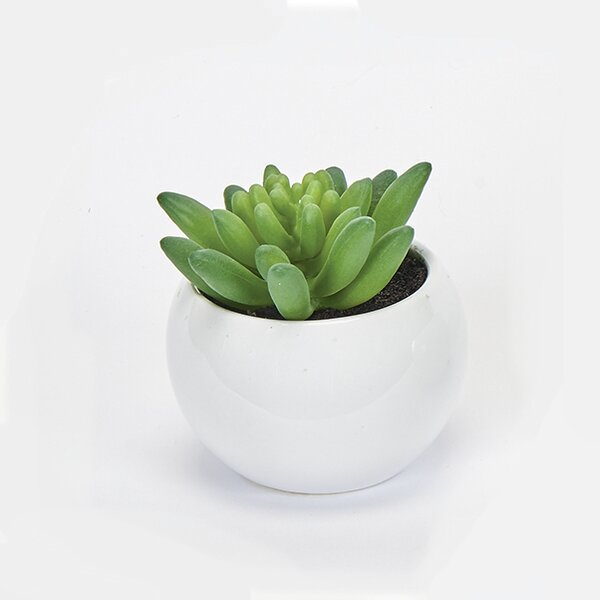 Zipcode Design Desktop Succulent Plant In Ceramic Pot