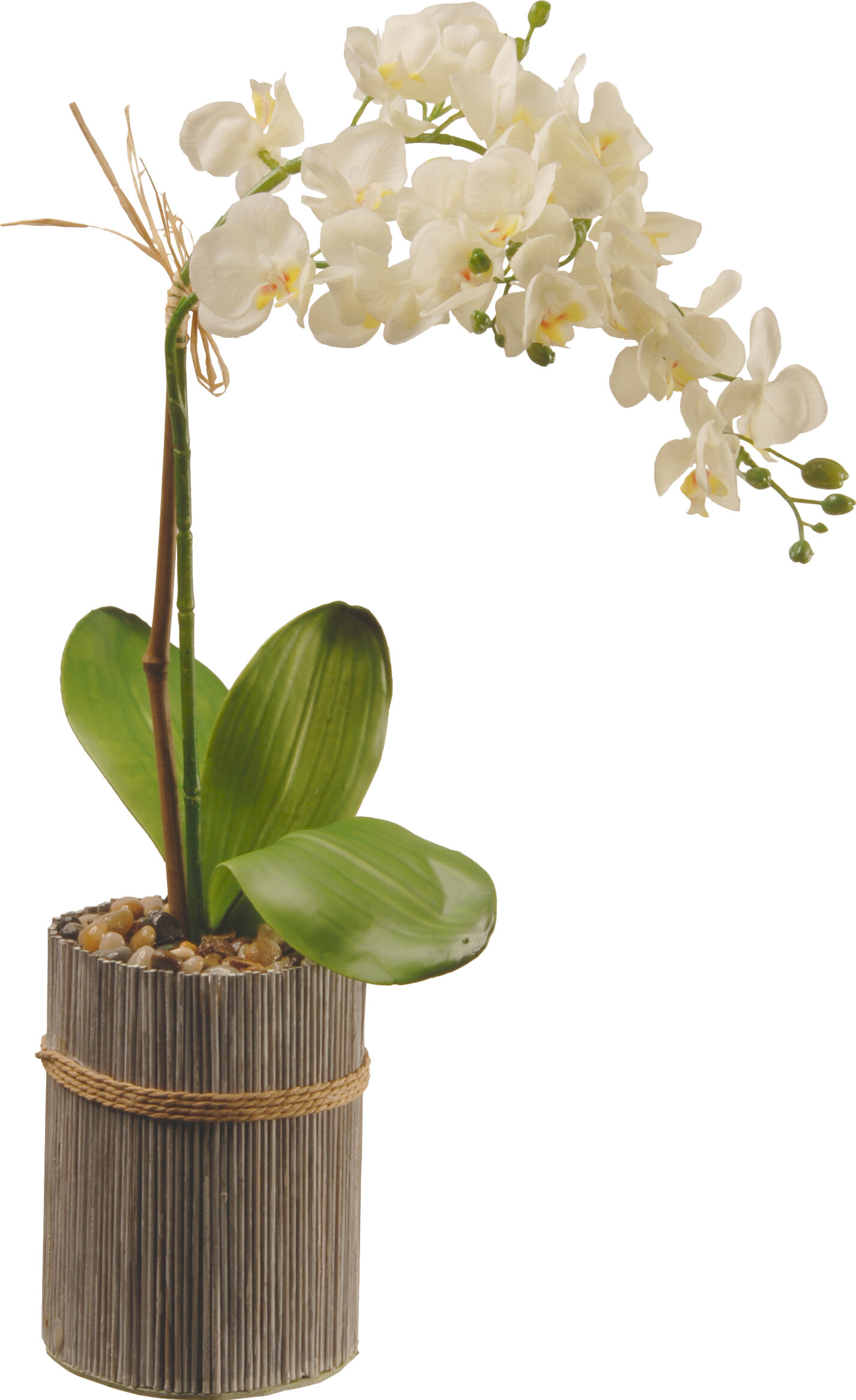 Potted orchid reviews joss main reviewsmspy