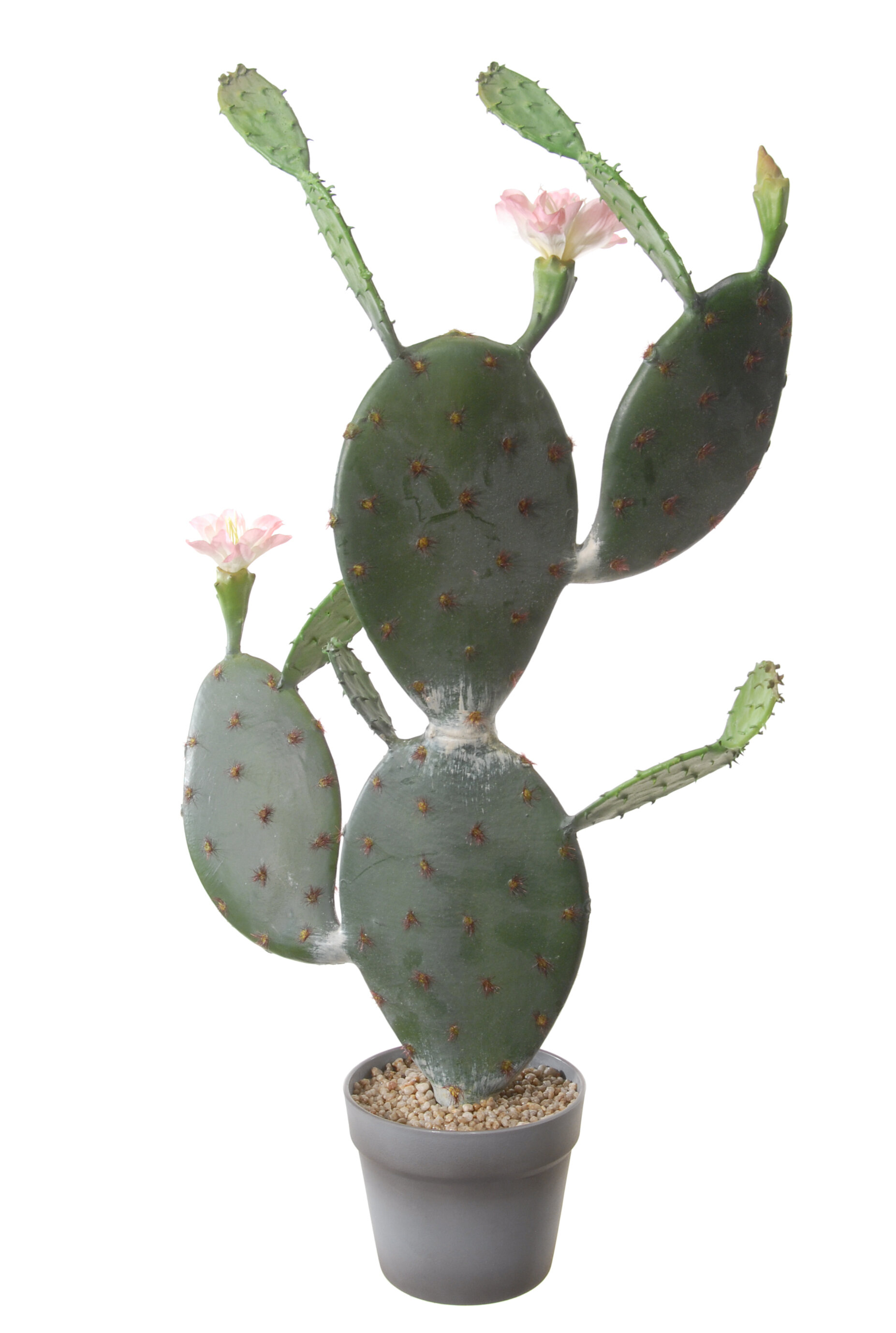 Cactus with Flower Plant in Pot
