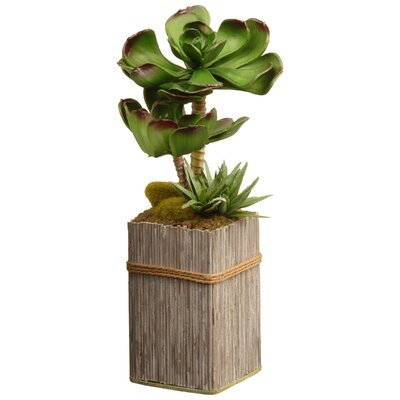 Succulent Plant In Square Pot Reviews Allmodern