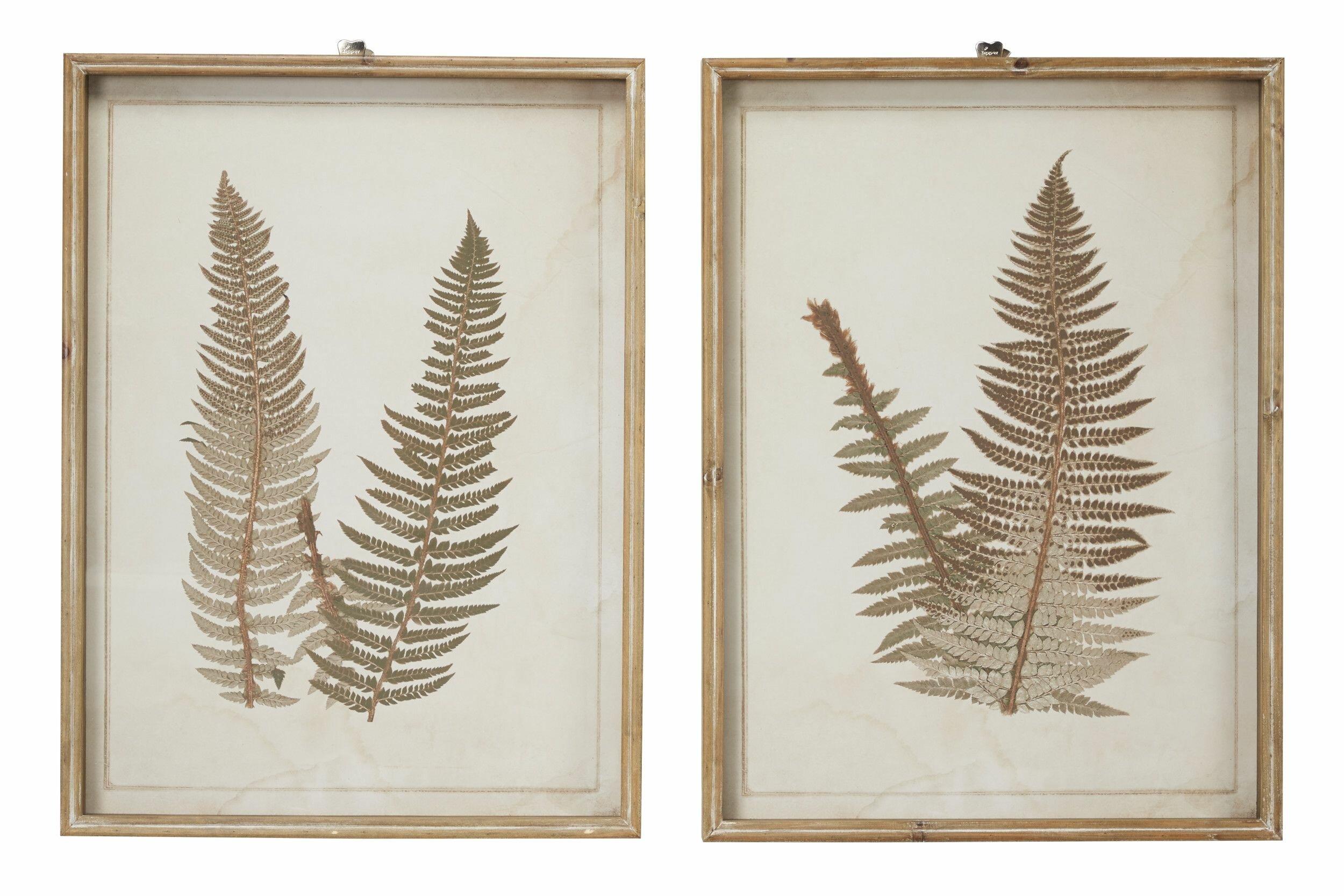 Large Vintage Fern Illustrations Framed Botanical Prints Wall Art Set Of 2 19 X 25 5 Each