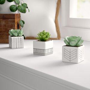 3 Piece Ceramic Succulent Desktop Plant in Pot Set