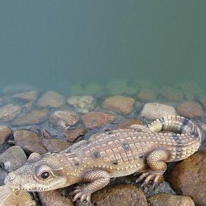 Small Crocodile Resin Animal Statue