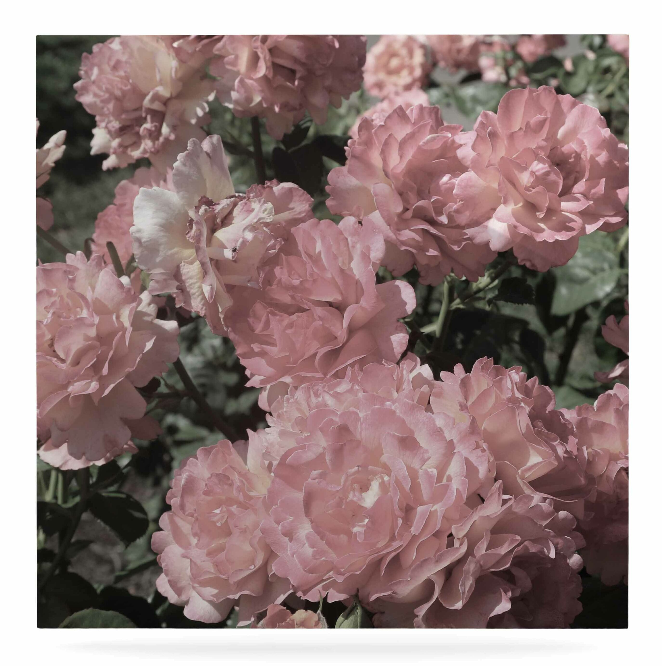 East Urban Home Blush Pink Flowers Photographic Print On Metal