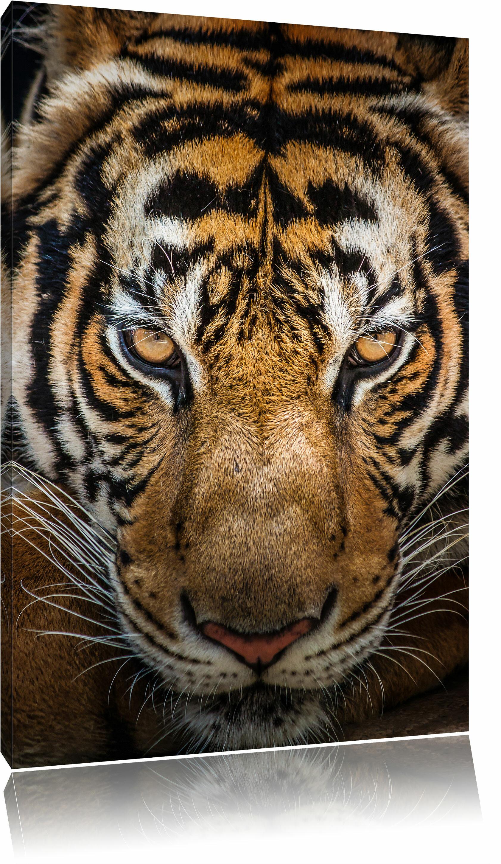 Home Loft Concept Leinwandbild Tiger mit hellbraunen Augen | Wayfair.de