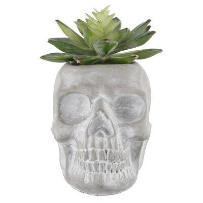 Skull Wayfair