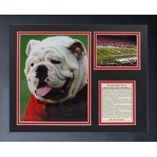 Georgia Bulldogs   Uga Framed Memorabilia