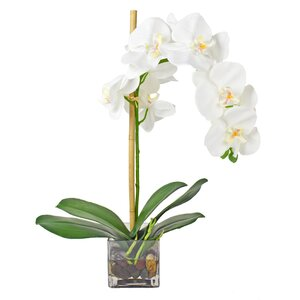 Faux White Phalaenopsis Orchid in Acrylic Glass