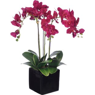 Faux Dark Purple Phalaenopsis Orchid
