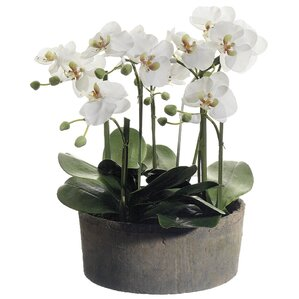 Faux Phalaenopsis Orchid Floral Arrangements in Clay Pot