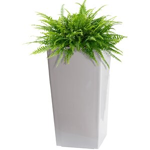 Majesty Self-Watering Plastic Pot Planter