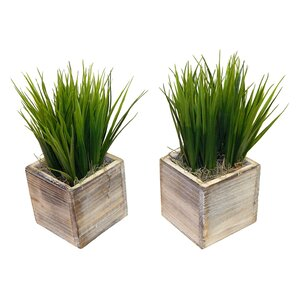 Faux Grass in Square Wooden Planter (Set of 2)