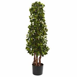 English Ivy Tree in Pot