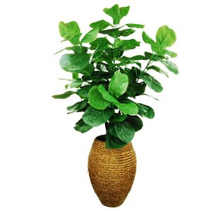 Faux Fig Tree in Tall Woven Basket