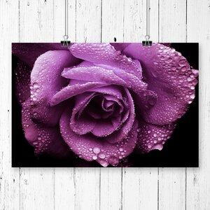 Flower Rose Photographic Print