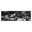 Artist Lane Moss Heaven by Andrew Brown Photographic Print on Canvas in Black/White