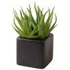 My Maison Succulent Desk Top Plant in Pot (Set of 2)