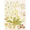 Magnolia Box Polyanthus and Primroses by Maria Sibylla Merian Framed Art Print