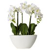 House of Hampton Lorelei Phalaenopsis Silk Flowers in Pot