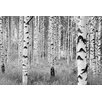 Komar Woods 2.48m x 368cm Wallpaper Roll