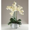 Babylon London Kunstpflanze Phalaenopsis Orchidee in Vase