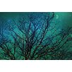 Marmont Hill Magical Night Photographic Print Wrapped on Canvas