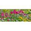Pro-Art Wildflower Meadow II Painting Print Glass Art