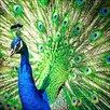 Pro-Art Peacock Painting Print Glass Art