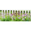 Pro-Art Glasbild Lovely Garden III, Kunstdruck