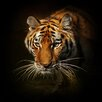 Pro-Art Tiger II Painting Print Glass Art