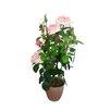 Ascalon Damask Rose with Terra Pot