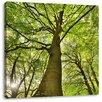 Pixxprint Leinwandbild Riesiger Baum im Dschungel