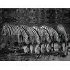 DEInternationalGraphics 'Zebras Reflection' by Xavier Ortega Photographic Print