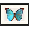 LivCorday Butterfly Series 30 Framed Graphic Art