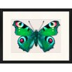 LivCorday Butterfly Series 18 Framed Graphic Art