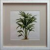 Castleton Home Palm Tree on Background II Framed Graphic Art