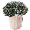 The Seasonal Aisle Snowy Leave and Branch Desk Top Plant in Pot (Set of 4)