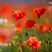 Pro-Art Orange Poppies II Photographic Print on Canvas