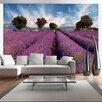 Artgeist Lavender Field in Provence, France 1.54m x 200cm Wallpaper